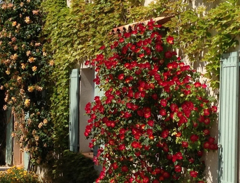 Spring in our b&b in Moustiers